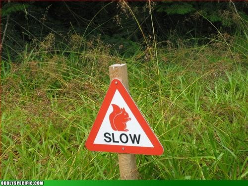 Warning:  Stupid Red Squirrels