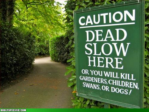 Funny Signs - Won't Someone Think of the Swans?!