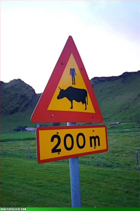 Funny Signs - Magic Decapitated Corpse Levitating Bovine 200M Ahead