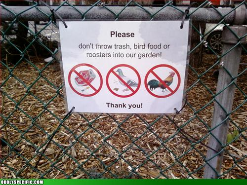 Funny Signs - No Roosters