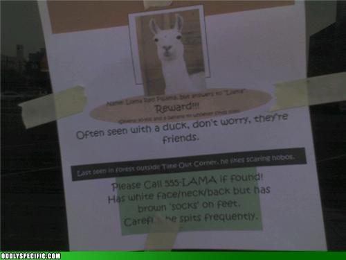 Funny Signs - Lost Llama
