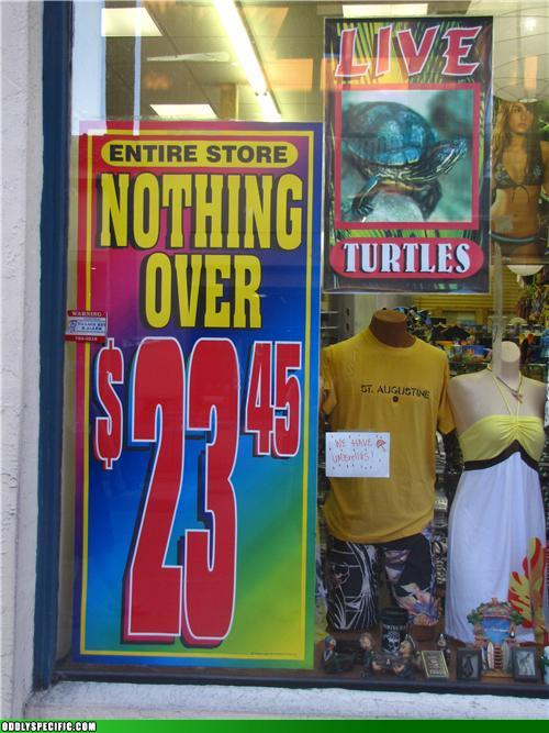 Because a $23.46 Turtle Would Just Be Silly